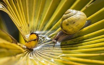вода, макро, лист, пальма, улитка, bertrand thiéfaine