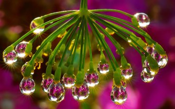 water, branch, the sun, reflection, background, flower, drops, drop, color