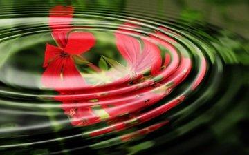 цветы, вода, волны, отражение, кольца, герань