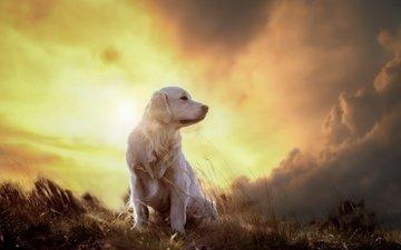 небо, облака, закат, собака, друг, роджер, золотистый ретривер, солнечный свет, viktor valter