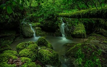 зелень, лес, швейцария, мох, водопады, ручьи, kaltbrunnen valley