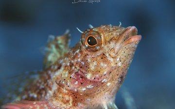 рыба, подводный мир