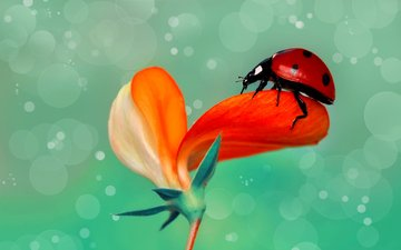 macro, insect, flower, ladybug, rain