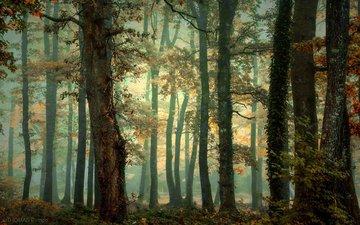 деревья, природа, лес, осень
