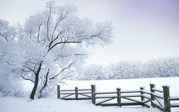 деревья, снег, природа, лес, зима, пейзаж, забор, природа. деревья