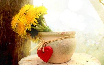 flowers, heart, dandelions