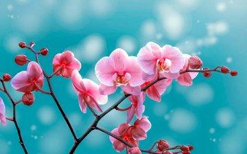 цветы, бутоны, фон, лепестки, орхидея, ozturk mustafa