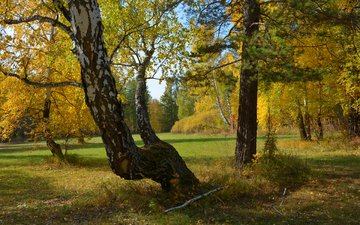 trees, nature, forest, autumn, russia, ural