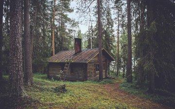 деревья, природа, лес, домик, сторожка