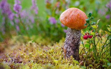 flowers, grass, forest, macro, autumn, mushroom, moss, berries, boletus