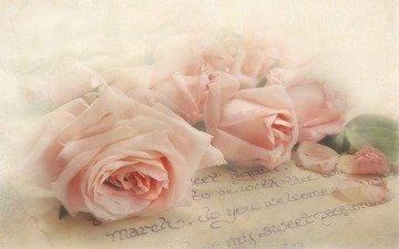 цветы, розы, лепестки, букет, письмо