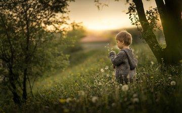 настроение, прогулка, ребенок, мальчик, одуванчики