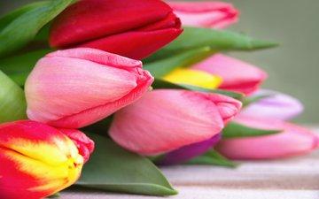 цветы, бутоны, весна, тюльпаны