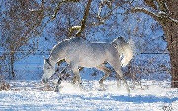 лошадь, деревья, снег, зима, конь, хвост