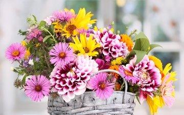 цветы, букет, корзинка, георгины, астры