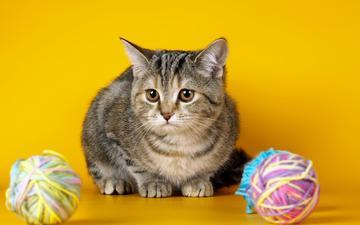 cat, mustache, wool, look, kitty, tangle, thread