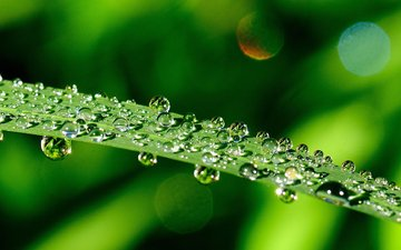 grass, water, greens, macro, rosa, drops, blur, a blade of grass