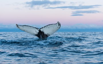 небо, вода, горизонт, хвост, кит, подводный мир, горбатый кит