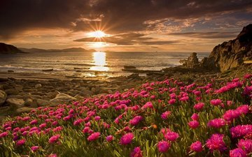цветы, горы, солнце, берег, закат, пейзаж, море, солнечные лучи