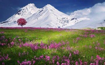 небо, цветы, трава, горы, снег, дерево, поле, луг, альпы