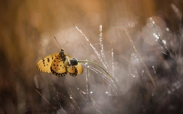 flowers, macro, butterfly