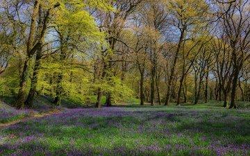 цветы, трава, деревья, лес, поляна, весна