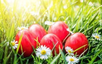 flowers, grass, chamomile, basket, easter, the painted eggs
