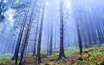 деревья, природа, лес, стволы