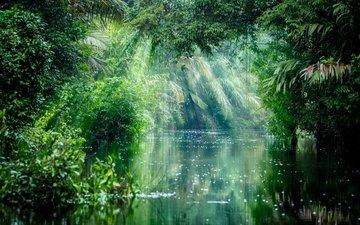 деревья, река, природа, лес, лучи, джунгли, солнечный свет