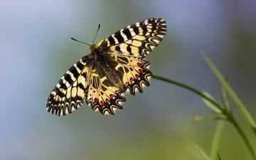 макро, бабочка, боке