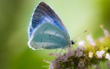 macro, background, flower, butterfly