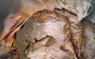 tree, macro, bark, birch