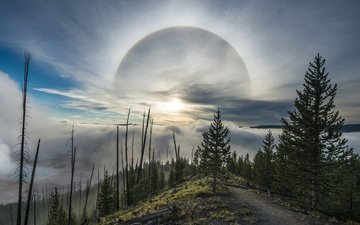 облака, деревья, природа, йеллоустоун