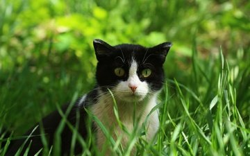 eyes, grass, cat, look