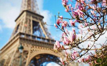 париж, весна, франция, эйфелева башня, магнолия