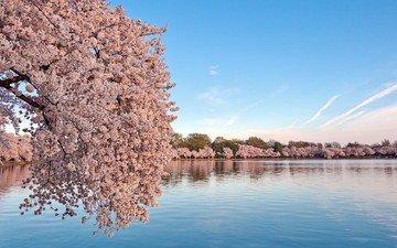 небо, вода, цветение, пейзаж, весна, сакура
