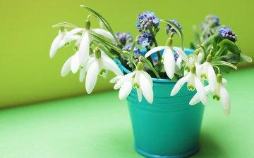 цветы, весна, незабудки, подснежники, ведро