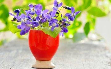цветы, ваза, фиолетовые, фиалки