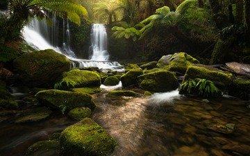 река, природа, камни, лес, водопад, джунгли, тасмания