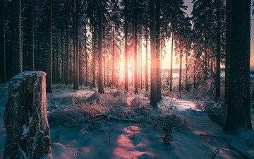 свет, деревья, снег, природа, лес, зима