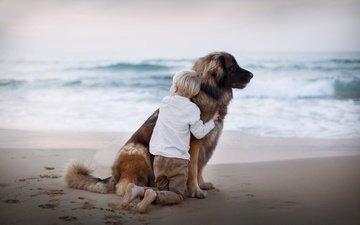 sea, sand, beach, dog, traces, child, boy, friends