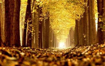 деревья, природа, листья, парк, осень, аллея
