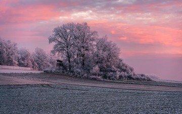 деревья, природа, закат, зима, поле, иней