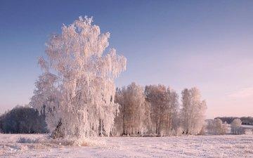 деревья, снег, природа, зима, пейзаж, иней