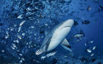 море, рыбы, акула, подводный мир, davide lopresti