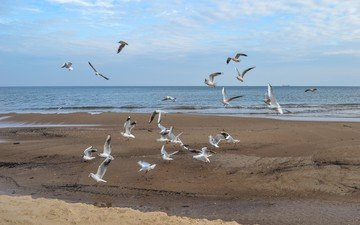 море, полет, пляж, крылья, птицы, чайки
