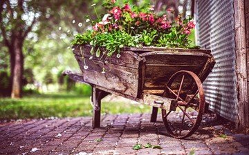 цветы, сад, тележка