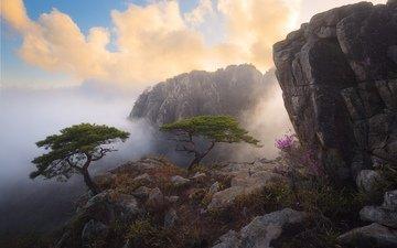 небо, цветы, облака, деревья, горы, природа, туман