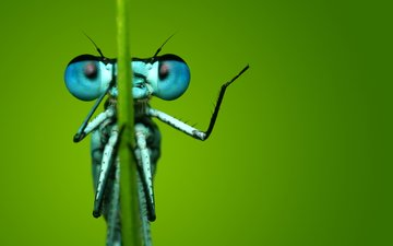 eyes, macro, insect, background, dragonfly