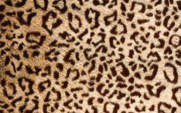texture, leopard, skin, fur